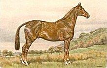 Lovely Vintage Signed Alderson Horse Postcard