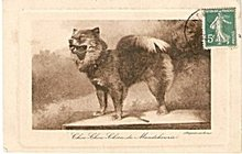 Chow Chow Dog Artist 1908 Postcard