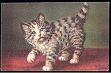 Lovely A. Lampe Grey Tabby Kitten Postcard