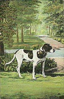 Lovely 1907 Spaniel Sporting Dog Postcard