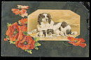 Winsch Dog with Puppies 1907 Postcard