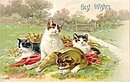 Kittens/Cats Playing 1911 Best Wishes Postcard