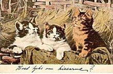 Lovely Cats/Kittens 1907 German Postcard