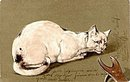 1906 PFB White Cat Crouched Postcard