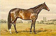 Lovely Vintage Signed Alderson Horse Postcard #2