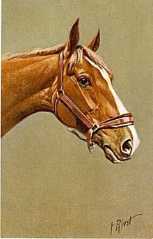 Vintage Signed F. Rivst Horse Head Postcard