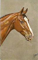 Vintage Signed J. Rivst Horse Head Postcard #2