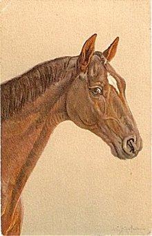 Vintage Signed J C Kaufmann Horse Head Postcard