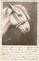 Signed 1904 E.V.M. White Pony/Horse Postcard