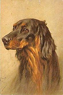 Lovely Spaniel/Retriever Signed Dog's Head Postcard