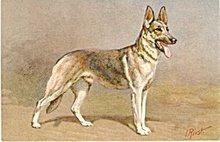 'Alsatian Wolfhound Dog' Vintage Postcard,  J Rivst