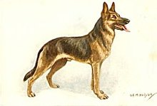 Vintage Alsatian Wolfhound Dog Postcard, Hollyer