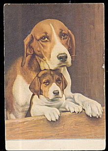Hound Dog and Puppy 1910 Postcard