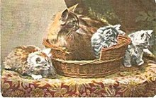 'Mother & Kittens in Basket' English Cat 1910 Postcard