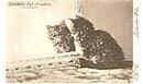 1904 Tucks Landers Cat Studies Postcard