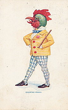 1906 'Crowing Again' Dressed Chicken/Rooster Postcard