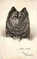 Tucks 1907 'Chow Chow' Dog Head Maud Watson Postcard
