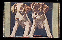 """""""Who Whistled?"""" Puppies/Dogs 1908 Postcard"""