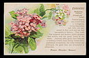 1907 NOVEMBER Birth Date Postcard - Lovely