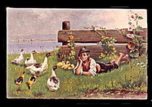 1907 Boy Lying Among the Ducks/Birds Postcard