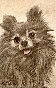 Fred Lauter 'Pomeranian' Early Dog Postcard