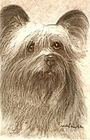 Fred Lauter 'Skye Terrier' Early Dog Postcard