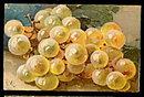 Lovely Artist C K Grapes Painting 1907 Postcard
