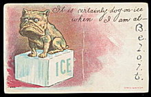 Bulldog Sitting on an Ice Cube Beloit 1907 Postcard