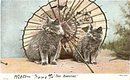 """Two Beauties"" Grey Kittens /Cats Postcard"