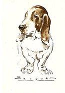 1920s Spanish Bacquer Beagle Dog Artist Postcard