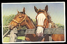 Vintage 2 Horses Hanging over the Fence Postcard