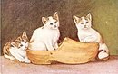 'Three Sisters' Cats/Kittens in Shoes 1908 Postcard