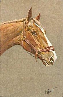Vintage Signed F. Rivst Horse Head Postcard #2