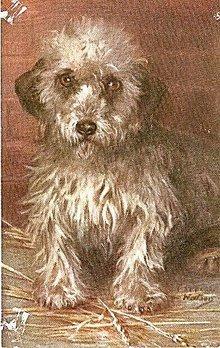 Tucks 1907 Terrier Dog Maud Watson Postcard