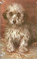 Tucks 1907 Terrier Dog Maud Watson Postcard