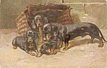 1907 TSN Germany Daschund Dogs Postcard