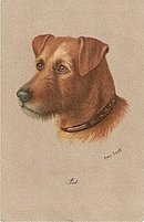 1908 Terrier Dog Head Signed Amy Scott Postcard