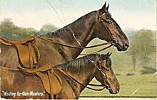 'Waiting for their Masters' Horses 1909 Postcard