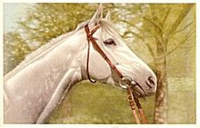 Great White Horse Head Vintage Postcard