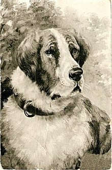 Great 1907 Saint Bernard Dog Artist Postcard