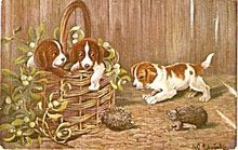 Puppies /Dogs in Basket 1910 Postcard