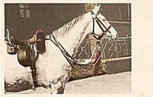 Great White Horse Vintage Postcard