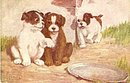 "Puppies /Dogs ""Eavesdropping"" 1908 Postcard"
