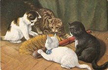 1907 Cats/Kittens with Broom Postcard