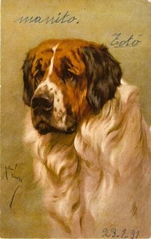 Gorgeous Signed Saint Bernard Dog Artist Postcard