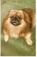 Great 1930s Pekingese Dog Postcard