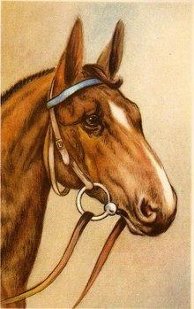 Vintage Horses Head Profile Postcard