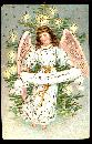 German Christmas Angel 1908 Postcard