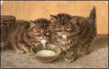 1905 M Stocks Tabby Kittens/Cats with Milk Postcard