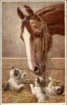 Horse Visiting with Kittens/Cats 1908 Postcard